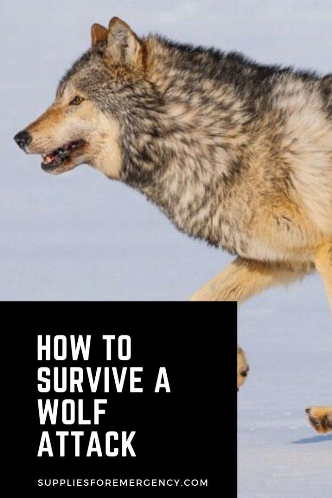 survive-wolf-attack