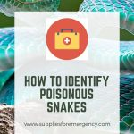 how-to-tell-a-poisonous-snake