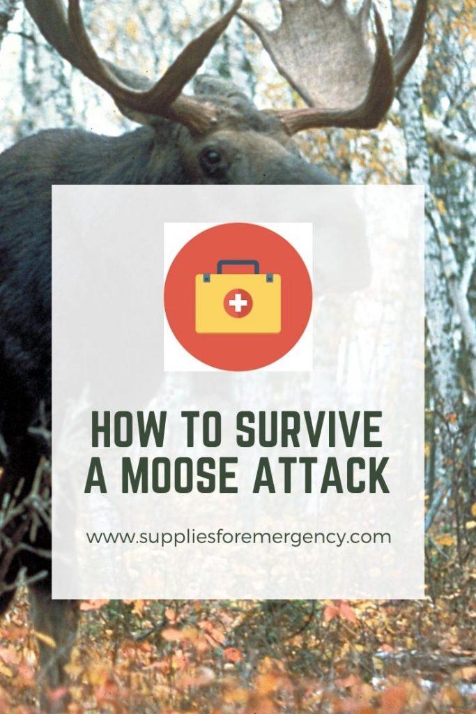 moose-attack