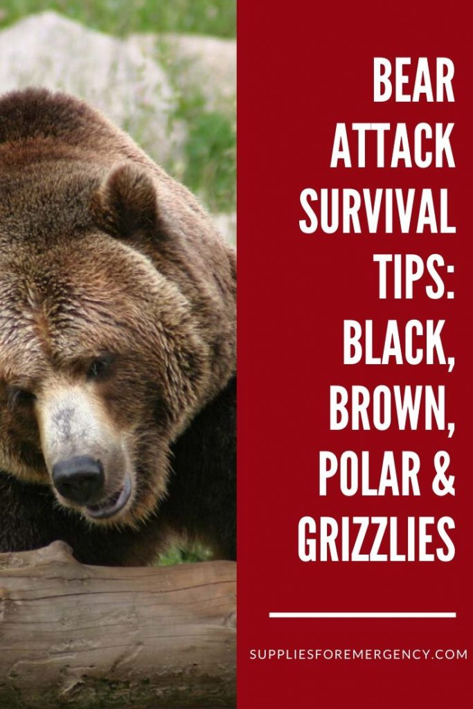 bear-attack-survival
