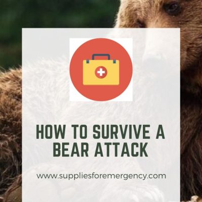 How to Survive a Bear Attack: Black Bears, Brown Bears, Polar Bears
